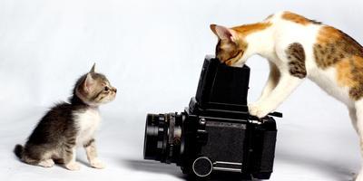 Стартовал весенний этап конкурса дачных фотографий!
