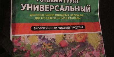 """Огурцы """"Бабушкин секрет F1"""". Тест на всхожесть"""