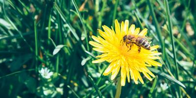 "Фотомарафон ""Пчела на цветке"""