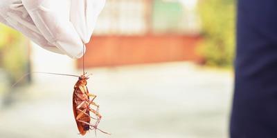 А у вас на даче или в доме есть тараканы?