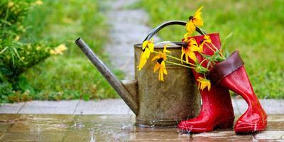 На 7 дач - выходные с дождем