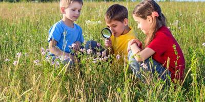 Помогите определить название дикороса! (Коллективный семидачный определитель дикорастущих растений)