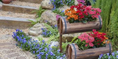 """Как написать рассказ к фотографии в призовой номинации """"Мой прекрасный сад"""""""