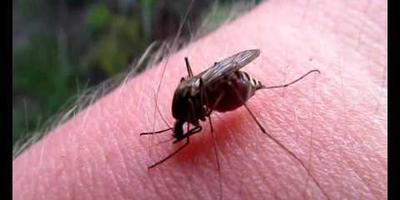 Обещаю до утра защищать от комара