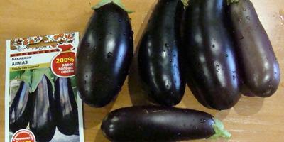 Поиск, Гавриш, СеДеК и другие: рассказ о том, как тестировались семена разных производителей на обычном огороде