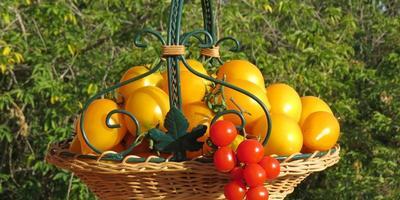 Поздравляем победителей проекта Народное тестирование семян ООО «Агрофирма АЭЛИТА»!