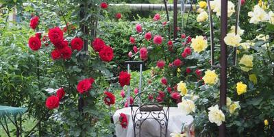 """""""Мой прекрасный сад"""" и наш прекрасный сад)))"""