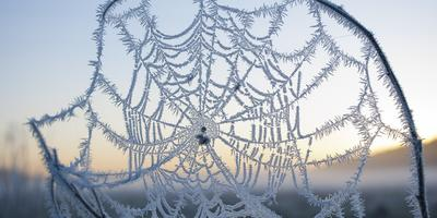 Гидрометцентр 7дач спрашивает - что у вас с погодой в первые дни зимы? Прием!