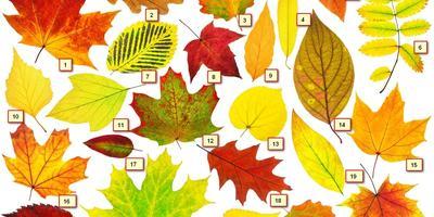 Чьи это листья? Сможете с ходу определить?