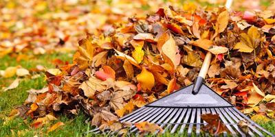Что вы делаете с опавшей листвой?