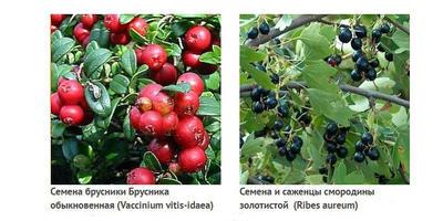 Знакомимся с Геннадием Анисимовым и его коллекцией лекарственных трав, овощей и ягод