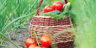 Объявляем набор в группу тестирования семян овощей и зелени компании ГАВРИШ!