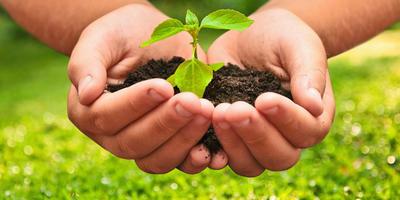 Группа тестирования средств защиты растений компании ТЕХНОЭКСПОРТ, приступаем к работе!