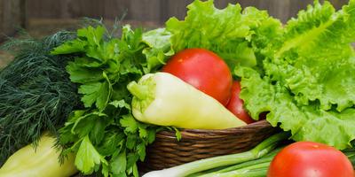 Группа тестирования семян овощей и зелени ГАВРИШ, начинаем работу!