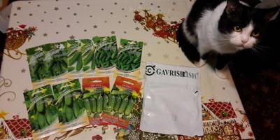 Пришла посылка с семенами огурцов от Гавриш!