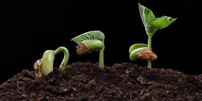 Тестирование стимуляторов роста (Энерген АКВА, Командор +, Корнерост). Инструкция
