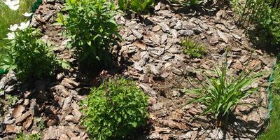 Мульчирование сосновой корой - секрет красивых цветников