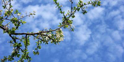 Гидрометцентр 7 дач спрашивает - чем порадовал вас конец мая?