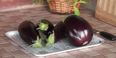 Блюда из баклажанов. Семидачные рецепты и советы