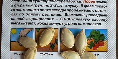 Кабачок цуккини Тигрёнок. Аналитический отчет