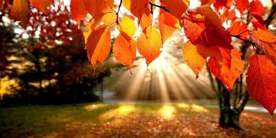 Осень золотом не жжёт, пусть немного подождёт... Объявление для участников фотоконкурса