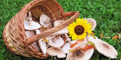 """Поздравляем победителей конкурса """"Кто с нами за грибами?""""!"""