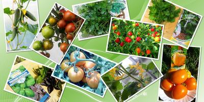 Поздравляем победителей проекта Народное тестирование семян овощей и зелени компании ГАВРИШ!