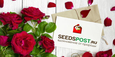 """Поздравляем победителей конкурса """"В новый сезон 2019 - с Seedspost.ru!"""""""