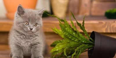 Внимание-внимание! Готовимся к конкурсу домашних растений!