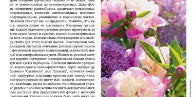 Статья про пионы в планшетной версии МОЙ ПРЕКРАСНЫЙ САД