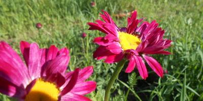 Подскажите название цветка?