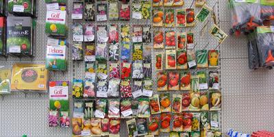 5 самых актуальных вопросов и ответов о семенах