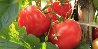 Азбука подкормок: азотные удобрения