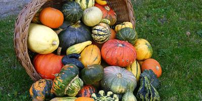Выращивание и использование декоративной тыквы