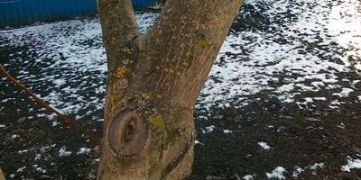 Зеленеющий налет на деревьях. Что это как от этого избавиться?