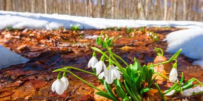 Несколько идей для ближайших мартовских выходных на даче
