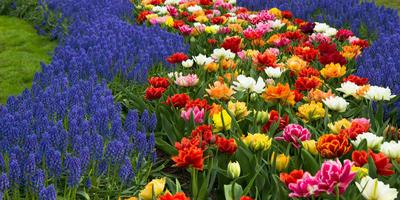 """15 цветочных """"спецэффектов"""", которые изменят ваш сад"""