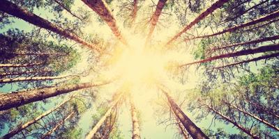 Поговорите с капустой, или Как наука доказала, что растения нас понимают