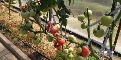 Результат превзошел все наши ожидания: от рассады и до урожая