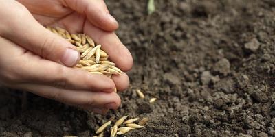 Свои семена: как вырастить, собрать, сохранить