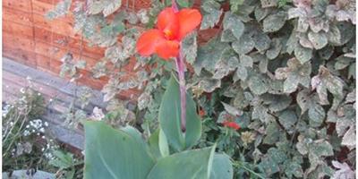 Помогите опознать цветок