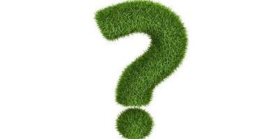 Не поздно ли пересаживать и вновь сажать декоративные кустарники (например, дерн)?