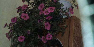 Помогите определить названия цветов