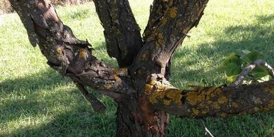 Помогите решить проблемы с плодовыми деревьями