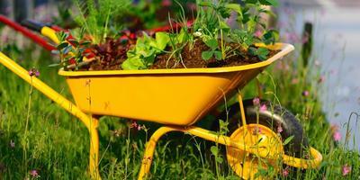 Как выбрать садовую тачку