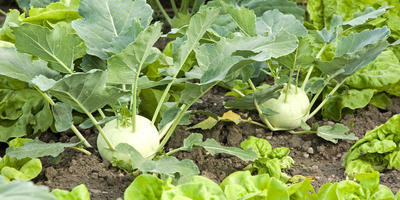 Растения-индикаторы или причина отказаться от монопосадок