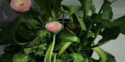 На 8 марта подарили цветок. Подскажите, как называется?