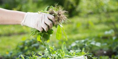 Как сделать компост из листьев за 7 дней