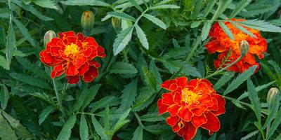 Топ-5 моих любимых цветочных культур