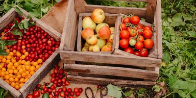 Основные принципы локаворства и локаворской кухни